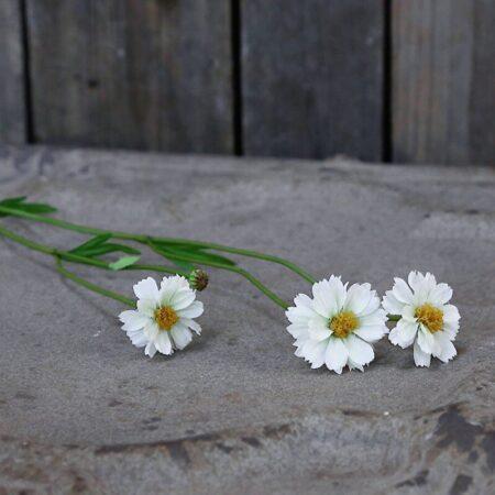 Chic Antique Fleur Gräben Kante Weiss
